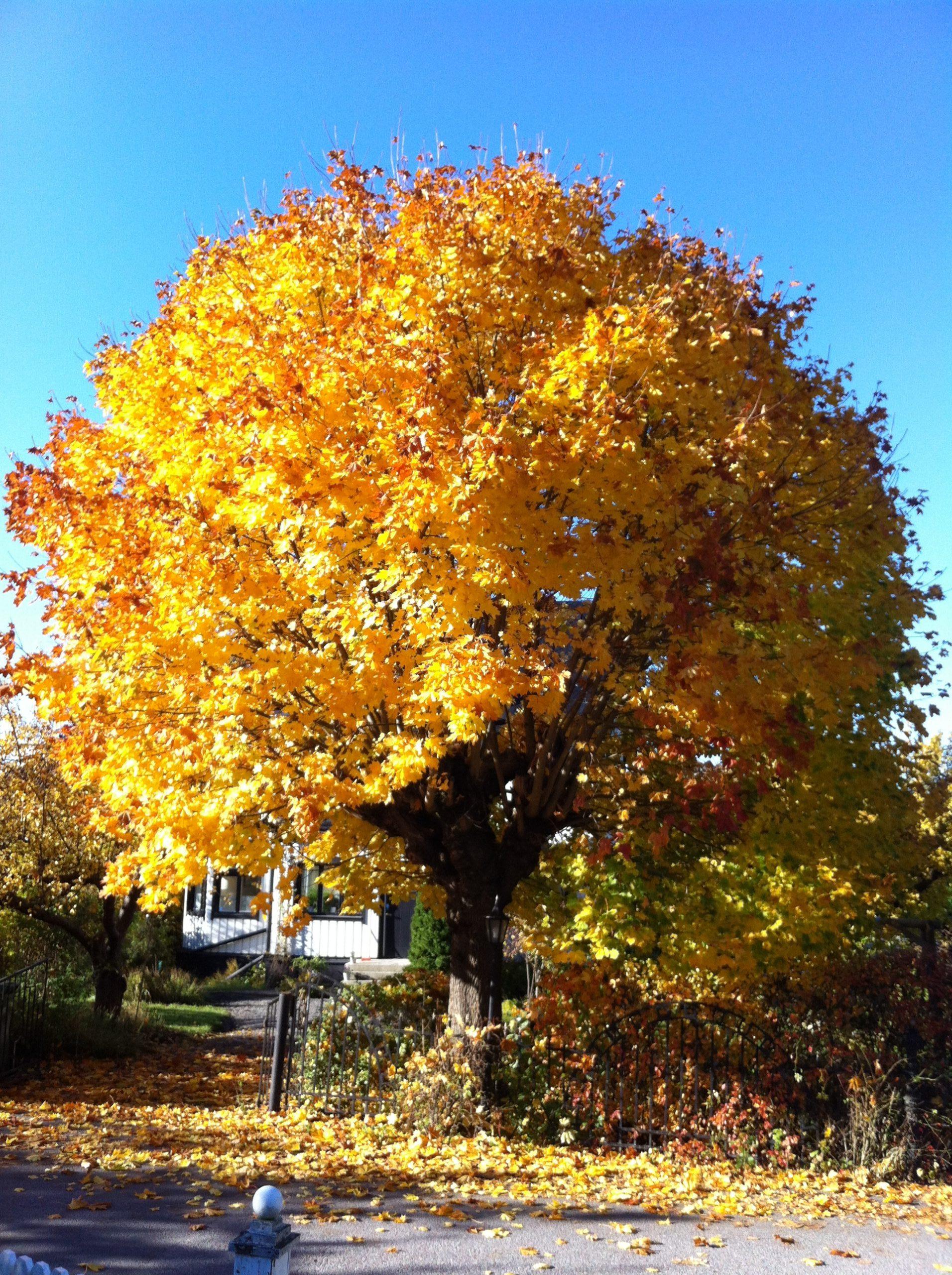 Hösten i Duvbo